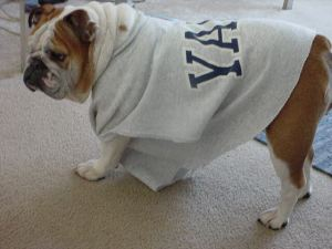 Tilly in her School Sweatshirt Before the Tailor Alters it