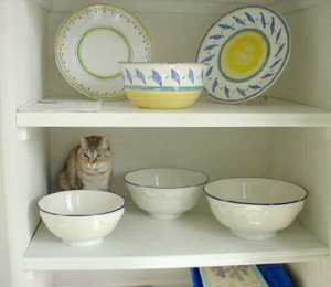 Scooter Kitchen Shelf March 16, 2007