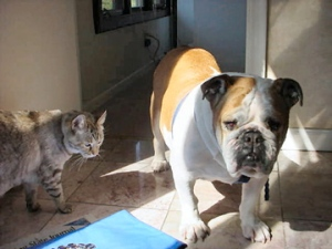 Scooter & Tilly in Sun March 20, 2007